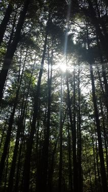 BK PA Trees